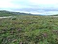 Island - geograph.org.uk - 229474.jpg