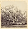 James Sinclair, fourteenth earl of Caithness (British - Old Pollard Oak at Forest Gate - Google Art Project.jpg
