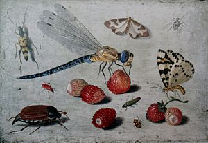 Insects in art - A Dragon-fly, Two Moths, a Spider and Some Beetles, With Wild Strawberries by Jan van Kessel, 17th century. A wasp-mimicking longhorn beetle, top left; clouded border moth, top right; migrant hawker dragonfly and cardinal beetle, centre left; magpie moth, centre right; cockchafer, lower left.