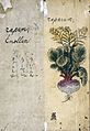 Japanese Herbal, 17th century Wellcome L0030109.jpg