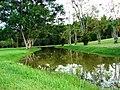 Jardim Botanico - panoramio - Sádia Cattoni (2).jpg