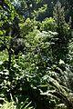 Jardin Alpin @ Jardin des Plantes @ Paris (27933467030).jpg