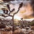 Joshua Tree (15663249647).jpg