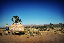 Joshua Tree California Wikipedia