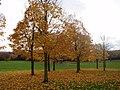 Jubilee Park in Autumn - geograph.org.uk - 1120285.jpg