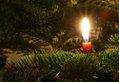Weihnachtskerze am Weihnachtsbaum, von Wikimedia Commons
