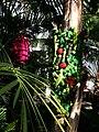 Jungle guerilla knitting (8609960936).jpg