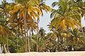 Kalavoor Alleppey Beach.jpg