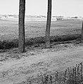 Karakteristieke landschappen, tuinbouwcentra, erica, Bestanddeelnr 164-0246.jpg