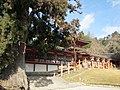Kasuga Taisha Kasuga Grand Shrine National Treasure World heritage 国宝・世界遺産春日大社29.JPG