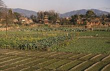Champs dans la vallée de Katmandou en bordure d'un village.