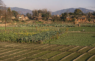 Agriculture in Nepal - Cultivation in the Kathmandu Valley