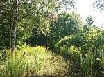 Kharkiv Botanical Garden 04.jpg