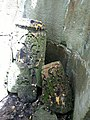 Khatchkars in Nor Varagavank (18).jpg