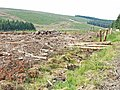 Kielder Forest, looking over the valley of the Neate Burn - geograph.org.uk - 209160.jpg