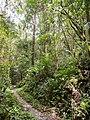 Kinabalu Park (13891114634).jpg