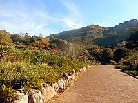 Kirstenbosch National Botanical Garden by ArmAg (31).jpg