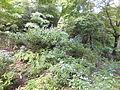Kobe Municipal Arboretum in 2013-6-22 No,67.JPG