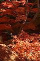 Kobe Suma Rikyu Park09n4592.jpg