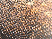 Closeup of a Komodo dragon's skin.