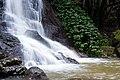 Kondalilla Falls Cascading into a Pool.jpg