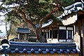 Korea-Andong-Hahoe Okyeonjeongsa-Buildings and pine tree-01.jpg
