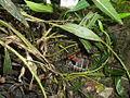 Kornjače (vrt).JPG