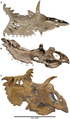 Kosmoceratops.png