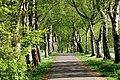 Kurpark Randringhausen.jpg