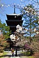 Kyoto, 桜, sakura, Ninnajii - Cherry blossoms 2015 - panoramio (1).jpg