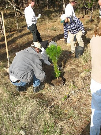 Monterey County reforestation - LMP Class of 2008 Reforestation Project