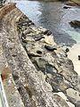 La Jolla Cove 22 2016-06-05.jpg