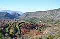 La Vall de Gallinera, paisatge amb cirerers.JPG