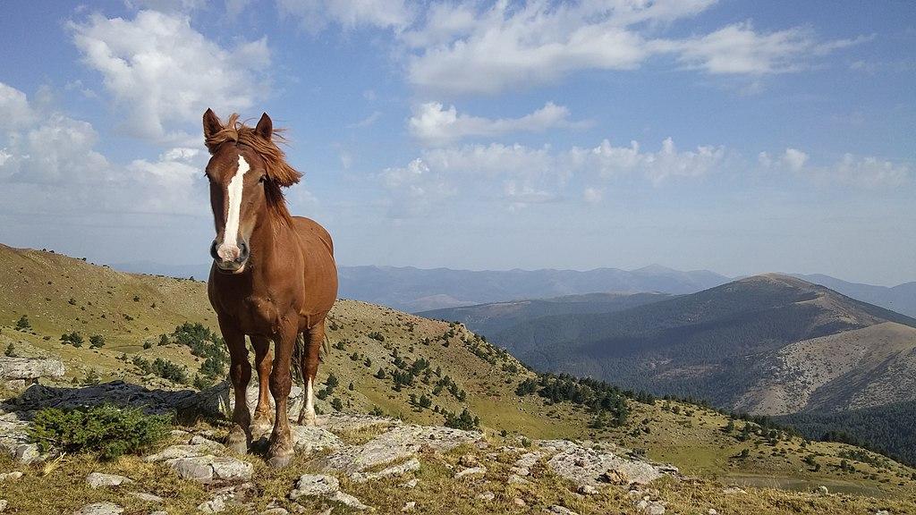 La yegua posa en las cumbres de Picos de Urbión en una calurosa jornada de verano
