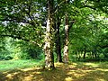 Lagodekhi Green (Photo by Peretz Partensky, 2009) (5).jpg