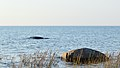 Lake Huron viewed from MacGregor Point Provincial Park 02.jpg
