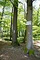 Landschaftsschutzgebiet Gütersloh - Isselhorst - Weg zur Lutter (1).jpg