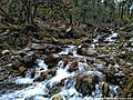 Langtang-Kyanjin Valley Trekking, Langtang National Park, Rasuwa, Nepal.jpg