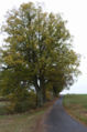 Lauterbach Frischborn Eisenbach Quercus Lauterbach Avenue Autumn Baronenweg SW.png