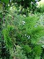 Le petit jardin, ArmAg (3).jpg