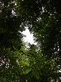 Leaves hole.jpg