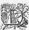 Letter D Image.jpg
