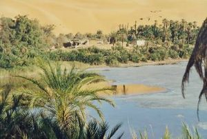 A typical Sahara Desert Oasis