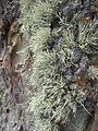Lichen (6062145505).jpg