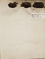 Lichenes Helvetici I II 1842 008.jpg