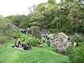 Lilac Sunday, Arnold Arboretum, Jamaica Plain MA.jpg
