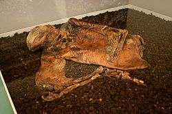 Lindow Man.jpg