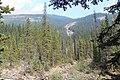 Little Yoho Valley IMG 4839.JPG