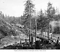 Loading site near logging camp 1, Wynooche Timber Company, probably in Grays Harbor County, ca 1921 (KINSEY 1513).jpeg