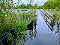 Lochness Lake dock underwater.jpg
